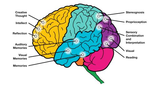The human brain and its functions